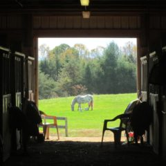 Community Partnership – The Virginia Horse Center